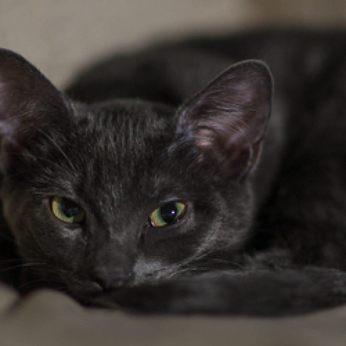 Piętnaście rzeczy, których nie wiecie o kotach, kot