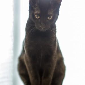 Piętnaście rzeczy, których nie wiecie o kotach