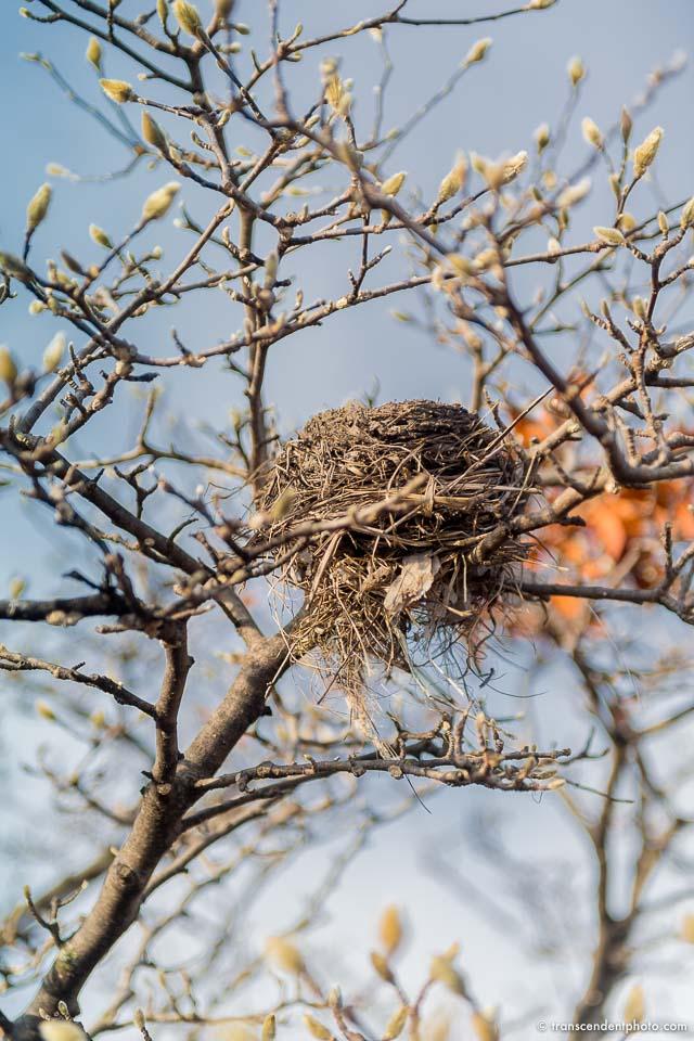 Simurg czyli ptak-wieloptak
