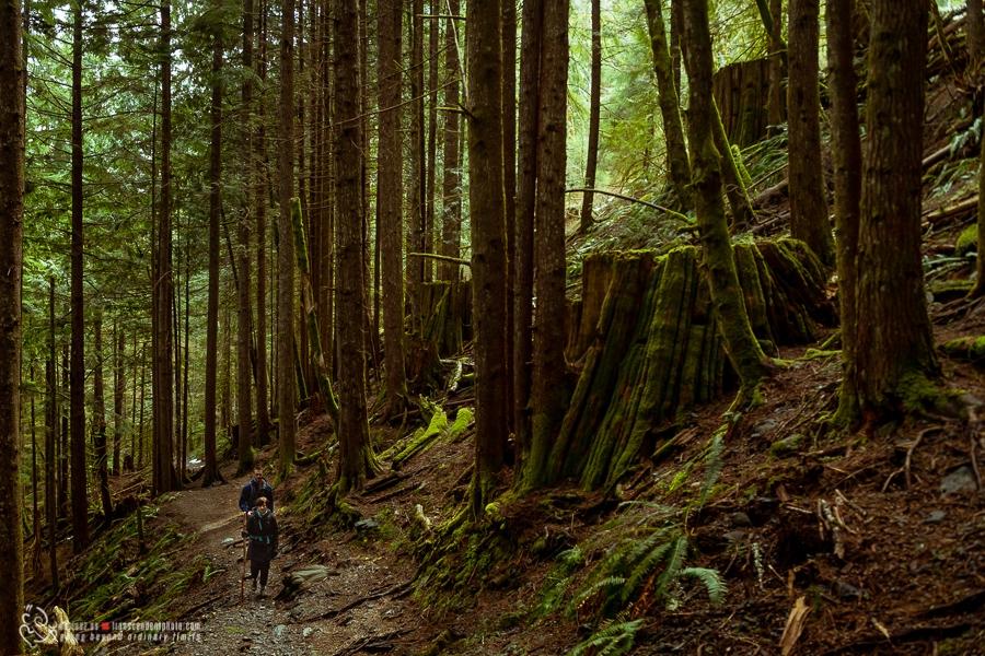 Wędrówka przez olbrzymi las