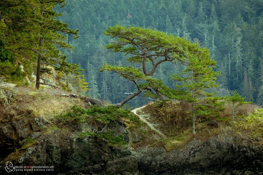 Chylące się drzewo
