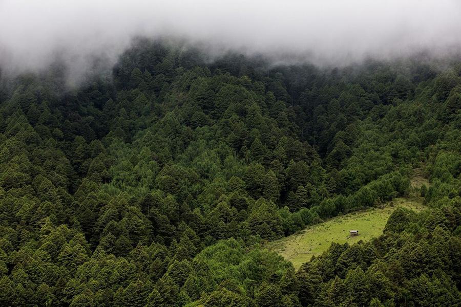 lasy w Bhutanie