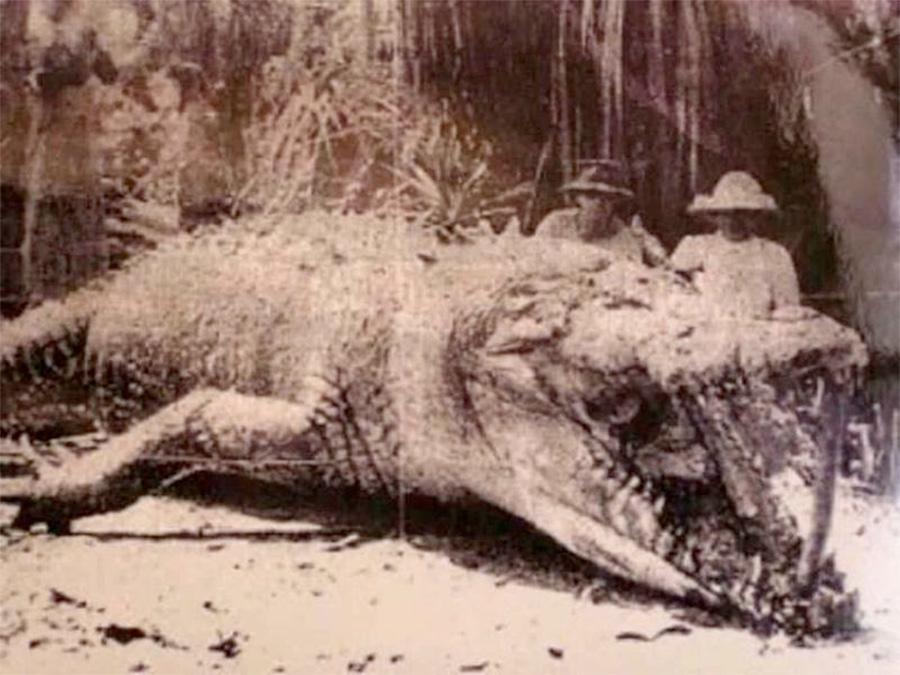 Kristina z upolowanym krokodylem w 1957 roku