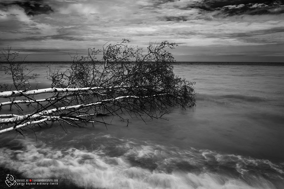 Czarno-białe zdjęcie, przdstawia złamane drzewo zanurzone w wodzie, to pożegnanie