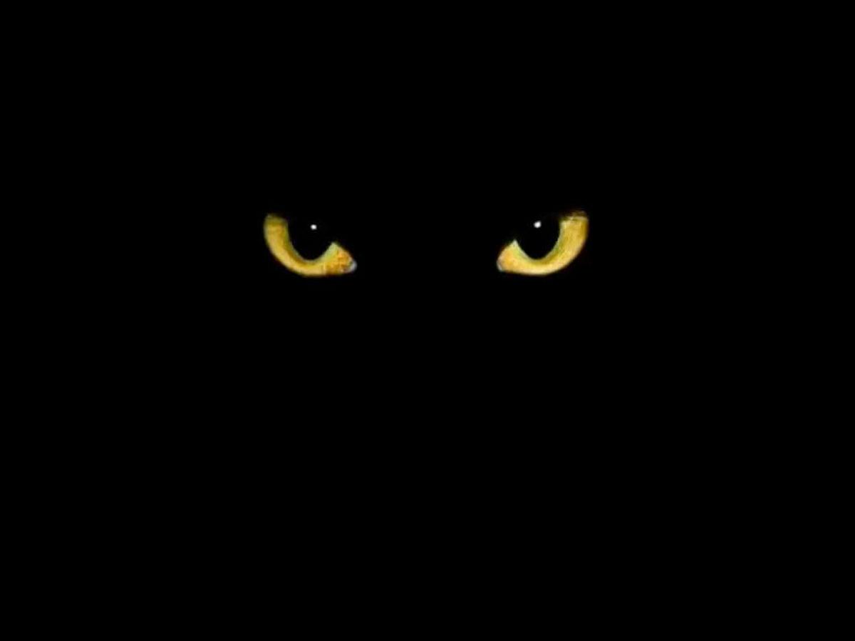 Kocie oczy 13 w piątek