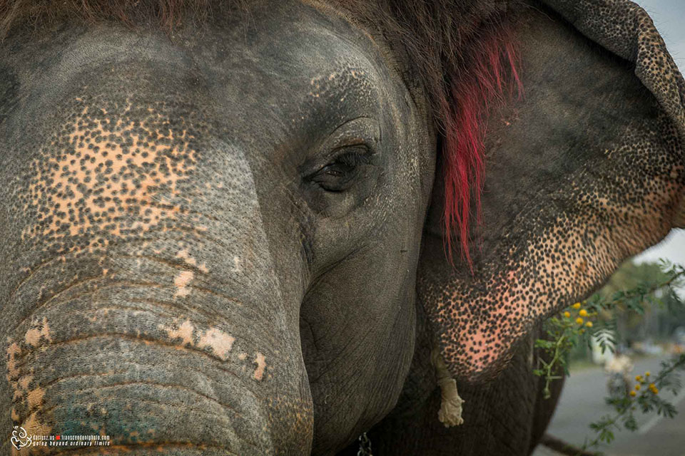 Fotografia słonia z bardzo bliska
