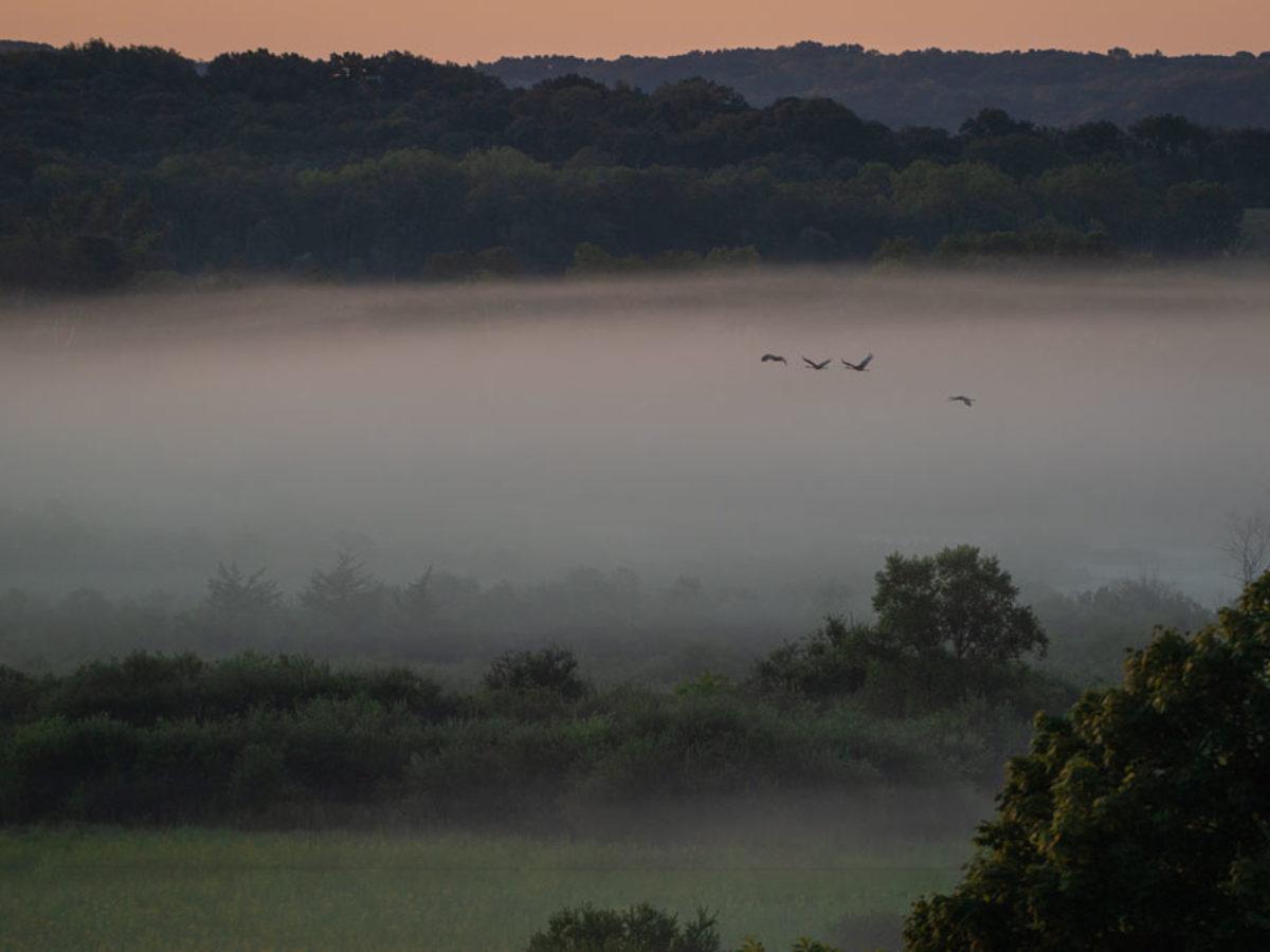 poranek, gęsta mgła nad polami, przelatujące ptaki